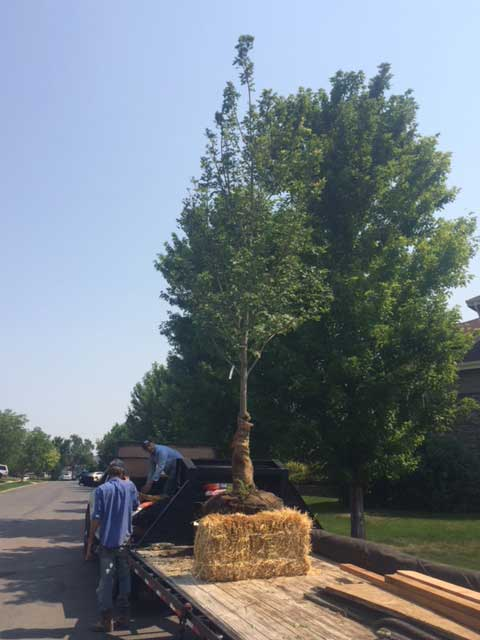 arrowhead-landscaping-workers